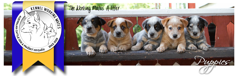 WM-sidbanners-puppies